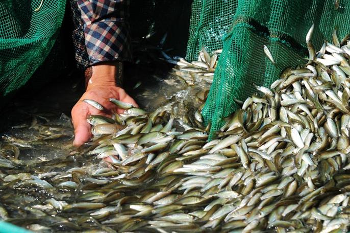 Cận cảnh săn, bắt, hái, lượm mùa nước nổi - Ảnh 6.
