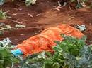 Hổ vồ chết một phụ nữ, 45 trường học đóng cửa