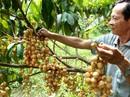 """""""Quả táo cắn dở"""" của Mỹ và trái cây Việt"""