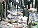 Thưởng 1,5 triệu đồng cho người phát hiện tè bậy, xả rác