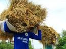 Năm u ám của xuất khẩu gạo