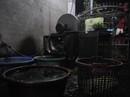 Sản xuất rau muống bào ngâm hóa chất bán cho nhà hàng