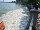Phó Thủ tướng giao Bộ Công an vào cuộc vụ cá chết ở Hồ Tây