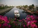 Sài Gòn tràn ngập sắc hoa Xuân