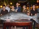 """Cá tra """"khủng"""" 200 kg về nhà hàng ở Đà Nẵng"""