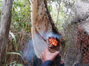 Sự thật về mật ong U Minh Hạ pha đường