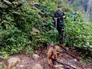 2 đội chó nghiệp vụ tìm du khách Anh mất tích ở Sa Pa
