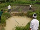3 trẻ chết thương tâm dưới hố nước tưới rau