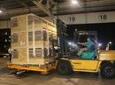 Công ty Hùng Vương nhập 750 con heo giống