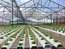 Ứng dụng công nghệ cao trong tái cơ cấu nông nghiệp