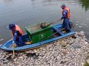 Video Clip: Toàn cảnh thu gom cá chết