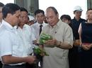 Thủ tướng: Mở rộng hạn điền, tích tụ ruộng đất để sản xuất lớn