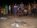 Mắc đẻ nhưng nhiều người xem, rùa nín đẻ trở lại biển