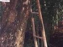 Tá hỏa thấy xác người treo lơ lửng trên núi Tung