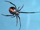 """Chàng trai 2 lần bị nhện cắn cùng vị trí vào """"chỗ kín"""""""