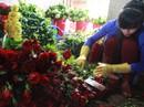 Hoa hồng Đà Lạt tăng giá gấp 3 lần
