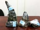 Đôi nam nữ lén đem 7 sừng tê giác về TP HCM