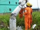 """Nỗ lực """"giải cứu"""" 2.600 trụ điện trung thế bị bão quật ngã ở Quảng Bình"""