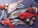 Cá đồng và cá biển: loại nào giàu chất dinh dưỡng hơn?