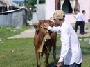 Tập đoàn FLC trao bê giống cho người dân Bình Định