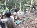 Ngang nhiên phá rừng phòng hộ