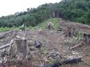 Nghệ An: Rừng phòng hộ tan hoang