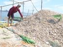 Vụ hải sản chết: Độc tố có dấu hiệu cao hơn bình thường