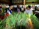 Ngắm những mô hình nông nghiệp độc đáo của Việt Nam tại APEC