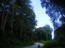 """Dồn sức giữ rừng (*): Lao vào """"cuộc chiến"""""""