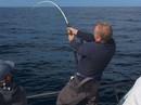 """Câu được cá ngừ vây xanh """"khủng"""" rồi thả xuống biển"""