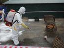 Virus cúm chết người chực chờ xâm nhập