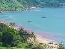 Đà Nẵng xác minh thông tin dải nước đỏ trên biển
