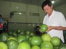 Thương lái Trung Quốc lại giở trò khi mua bưởi