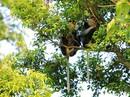 Khẩn thiết xin giữ rừng Sơn Trà