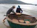 Ngư dân Đà Nẵng trúng đậm mùa ruốc