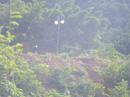 Đà Nẵng phản hồi vụ 40 móng biệt thự Sơn Trà thi công trở lại
