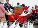 """Giây phút ngư dân Quảng Trị chạm mặt đàn cá """"trời cho"""" 6 tỉ"""