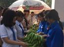 Sinh viên mua 1 tấn chuối trong 2 giờ giúp nông dân Đồng Nai