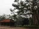 """Chuyện kỳ lạ về những """"cụ cây"""" ở di tích Lam Kinh"""