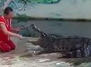 Nghệ sĩ xiếc bị cá sấu cắn khi biểu diễn