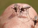 10 cách trị vết muỗi đốt ngay tức thì mà không cần bôi thuốc