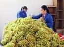 Nho, táo Ninh Thuận được bảo quản bằng công nghệ mới