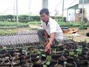"""""""Ẵm"""" vài tỉ đồng mỗi năm nhờ trồng nho giống"""