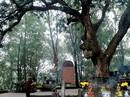 Báu vật lộ thiên ở đền Cao - Hải Dương