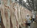 Thịt heo dư thừa, sao không xuất khẩu được?