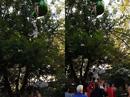 Mỹ: Đám đông xúm lại đỡ thiếu nữ rơi từ đu quay