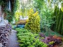 Những mẫu sân vườn đẹp như mơ