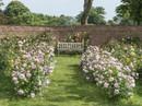 Mê mẩn vườn hồng hơn 1.000 gốc của cụ ông 91 tuổi