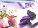 Vì sao Nhật mua lá tía tô Việt Nam tới 700 đồng một lá?