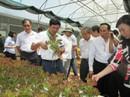 306.660 tỉ đồng tái cơ cấu ngành nông nghiệp